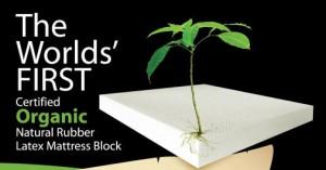 Dunlop foam made with USDA certified organic latex